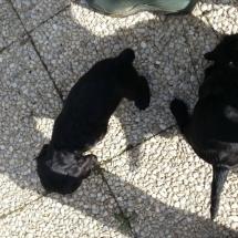 Loulou et Leïka