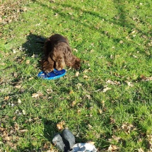 Jaguar et son frisbee