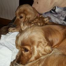 Lyp et Liara dans le canapé...
