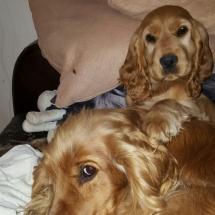Lyp et Liara dans le canapé....