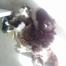 Morris et son chat