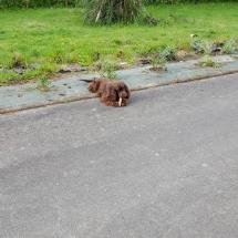 Jaguar dans le jardin