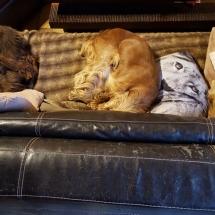 Jaguar, Lyp et Liara