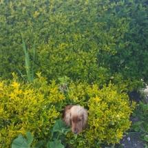 Lyp dans son buisson...