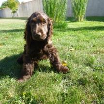 Marlay Lady, 3 mois