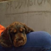 Paddigton 2 mois 3